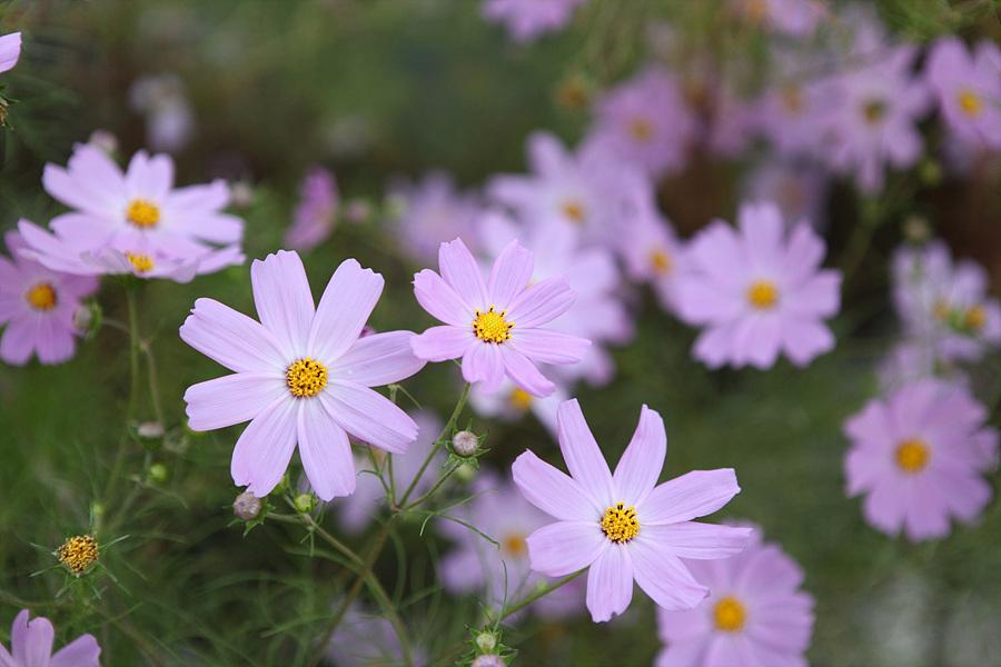 소야도 섬초롱펜션의 꽃